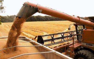 Los precios mayoristas de los cereales vuelven a flaquear con un descenso en cebada y trigo blando